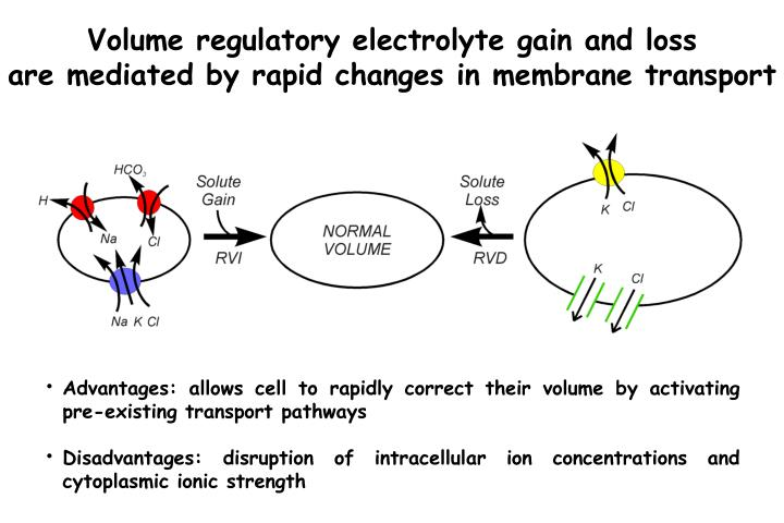Volume regulatory electrolyte gain and loss