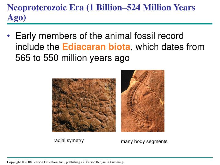 Neoproterozoic Era (1 Billion–524 Million Years Ago)
