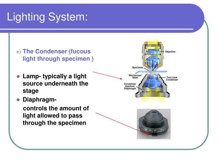 Lighting System: