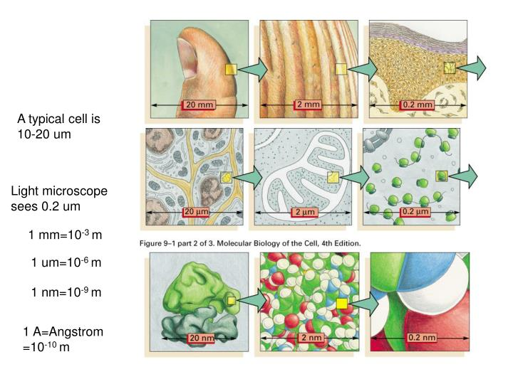 A typical cell is