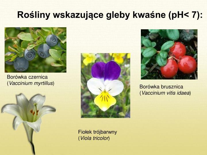 Rośliny wskazujące gleby kwaśne (pH< 7):
