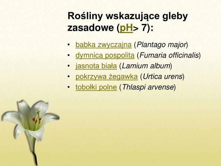Rośliny wskazujące gleby zasadowe (