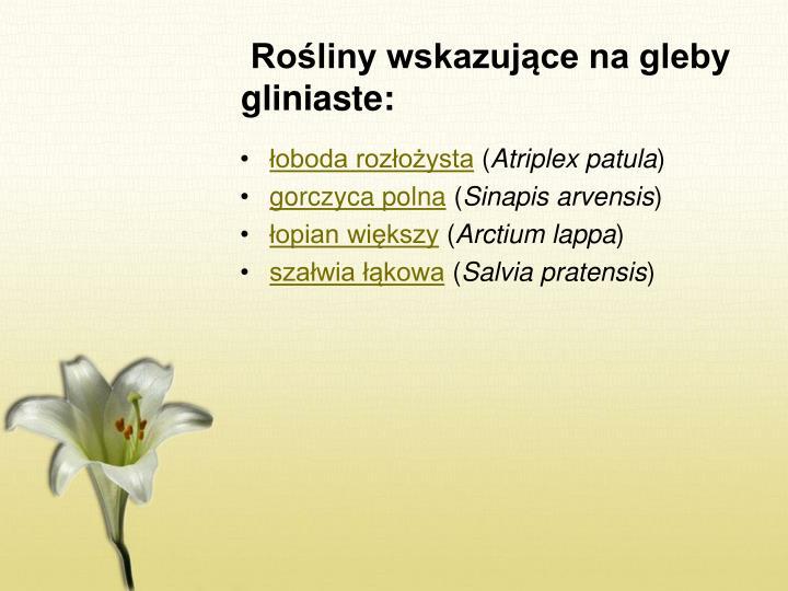 Rośliny wskazujące na gleby gliniaste: