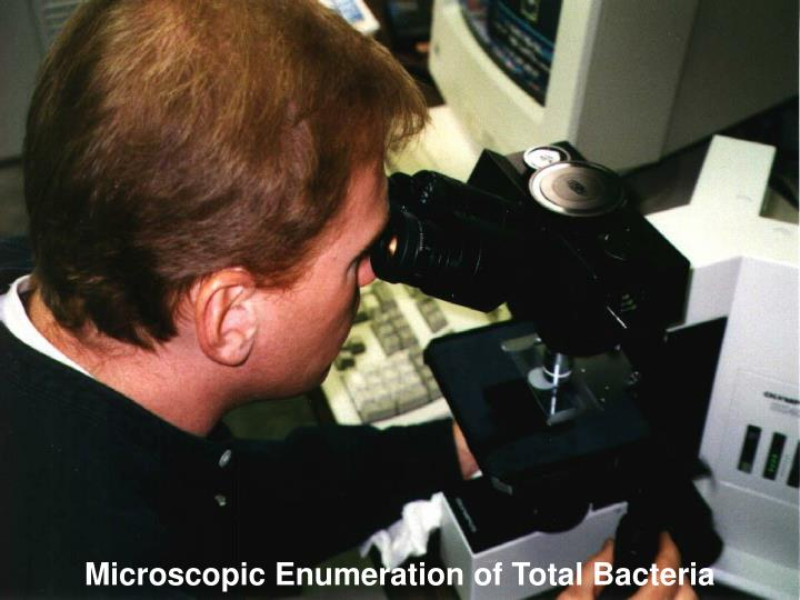 Microscopic Enumeration of Total Bacteria