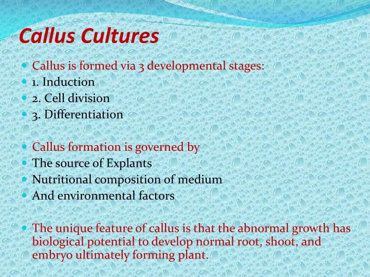 Callus Cultures