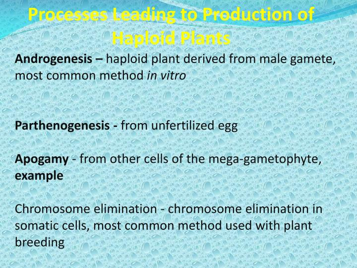 Processes Leading to Production of Haploid Plants