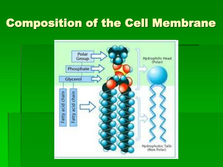 tonicity on cell membrane lab report Osmolarity and tonicity: an inquiry laboratory  be exerted by the plant cell wall on the cell membrane: if the  and this osmolarity-tonicity laboratory always .