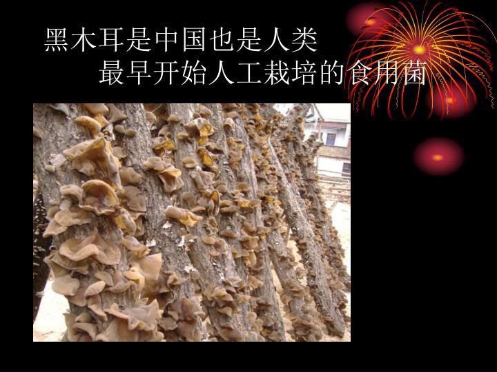 黑木耳是中国也是人类
