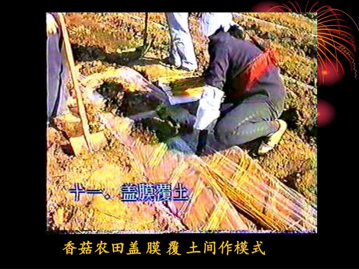 香菇农田盖 膜 覆 土间作模式