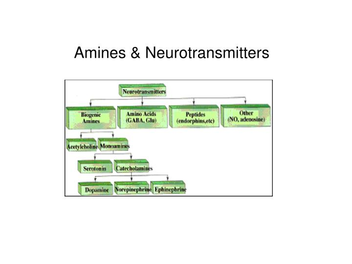 Amines & Neurotransmitters
