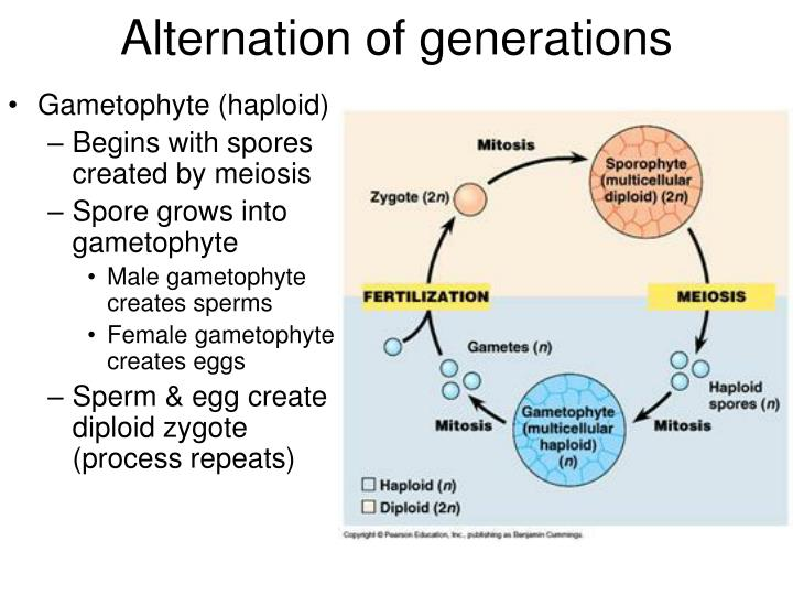 Alternation of generations1