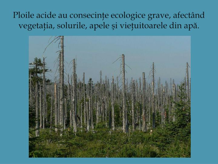 Ploile acide au consecinţe ecologice grave, afectând vegetaţia, solurile, apele şi vieţuitoarele din apă.