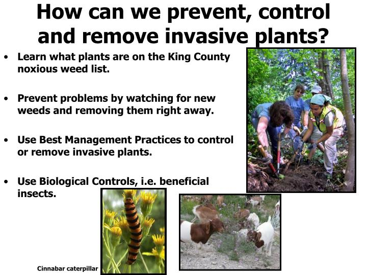 How can we prevent, control and remove invasive plants?