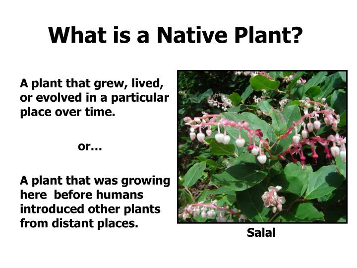 What is a native plant