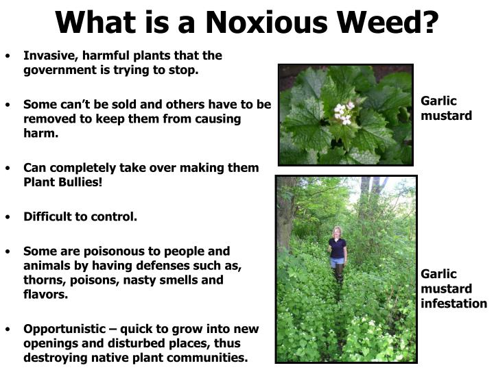 Invasive, harmful plants that the government is trying to stop.