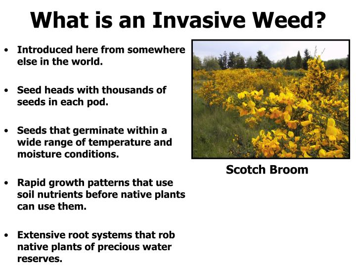 What is an Invasive Weed?