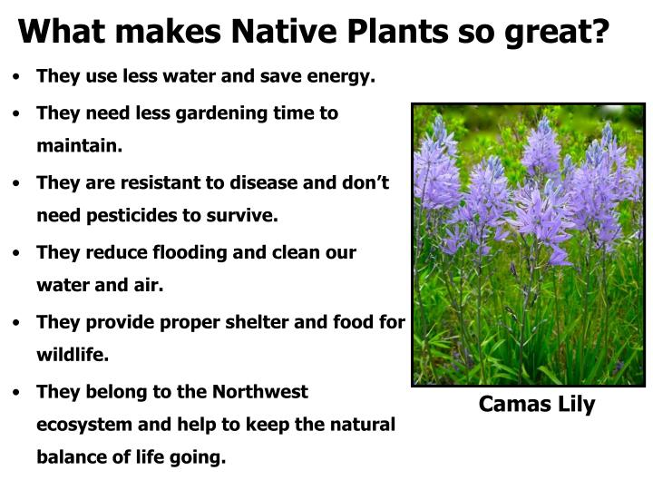 What makes native plants so great