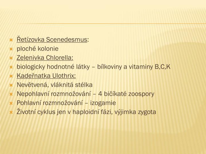 Řetízovka Scenedesmus
