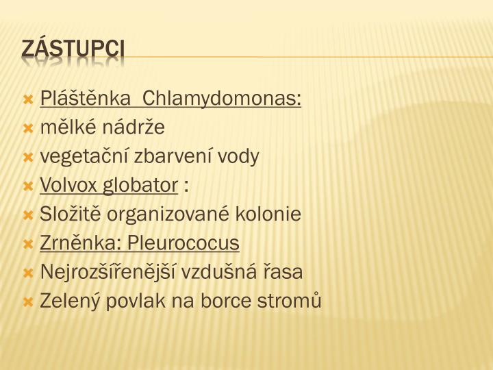 Pláštěnka  Chlamydomonas: