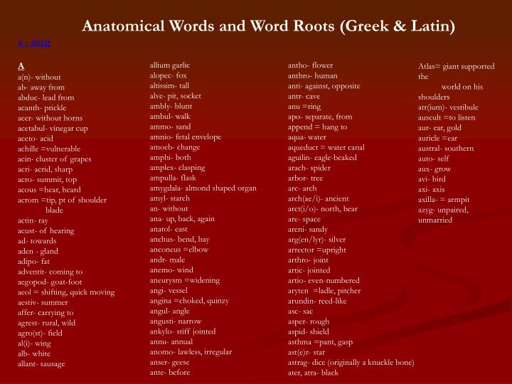 Anatomical Words and Word Roots (Greek & Latin)