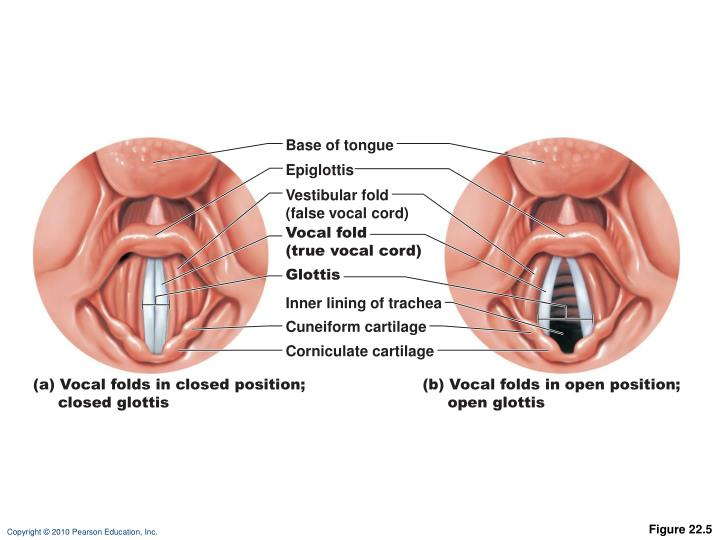 Base of tongue