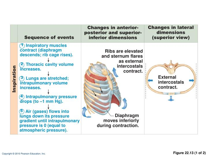Changes in lateral