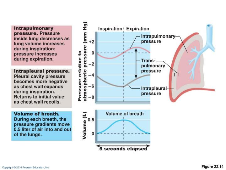 Intrapulmonary