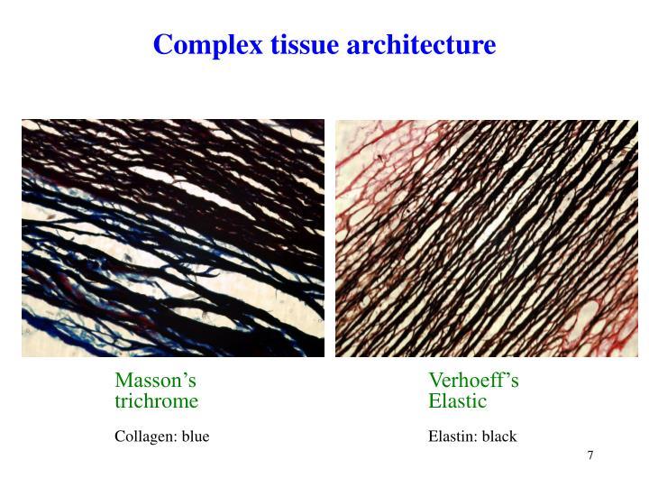 Complex tissue architecture