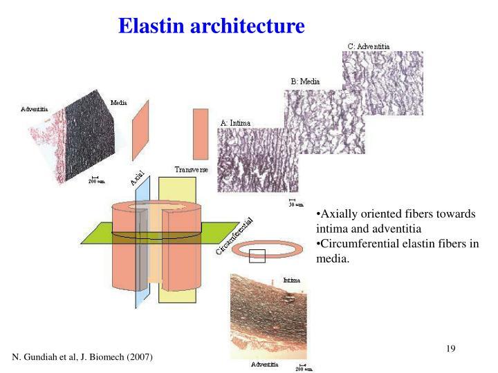 Elastin architecture