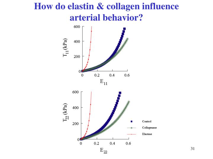 How do elastin & collagen influence arterial behavior?