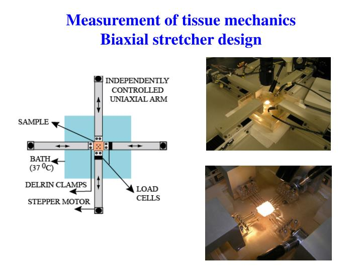 Measurement of tissue mechanics