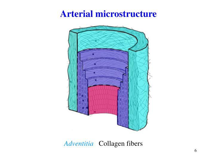 Arterial microstructure