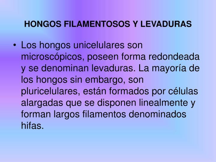 HONGOS FILAMENTOSOS Y LEVADURAS