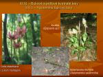 9130 bukov a jed ov kvetnat lesy 9110 kyslomiln bukov lesy