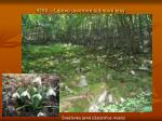 9180 lipovo javorov sutinov lesy