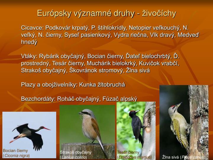 Európsky významné druhy - živočíchy