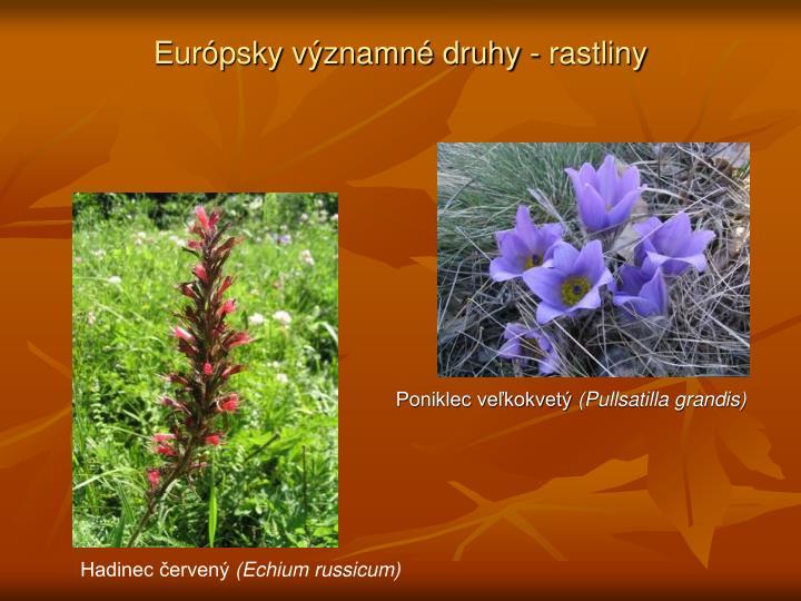 Európsky významné druhy - rastliny