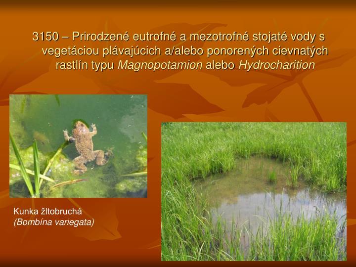 3150 – Prirodzené eutrofné a mezotrofné stojaté vody s vegetáciou plávajúcich a/alebo ponorených cievnatých rastlín typu