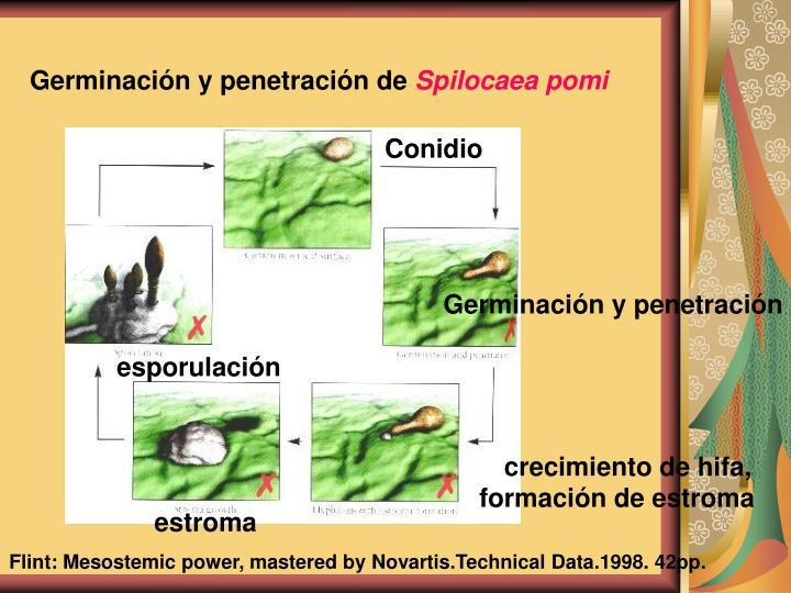El tratamiento de las micosis de las uñas del pies