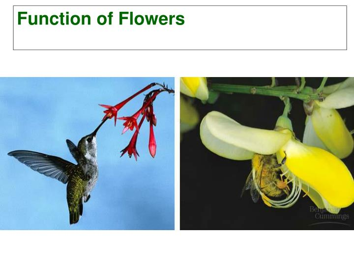 Function of Flowers
