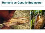 humans as genetic engineers