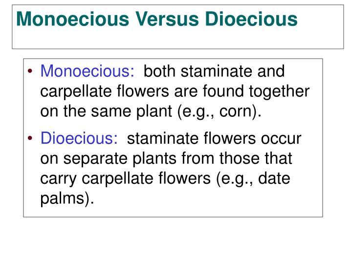 Monoecious: