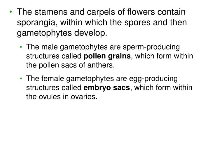 The stamens and carpels of flowers contain sporangia, within which the spores and then gametophytes develop.