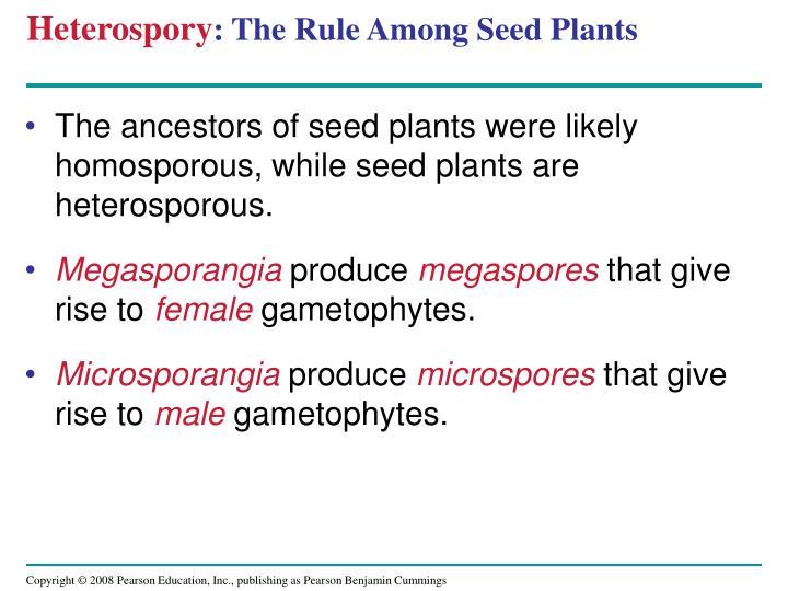 Heterospory