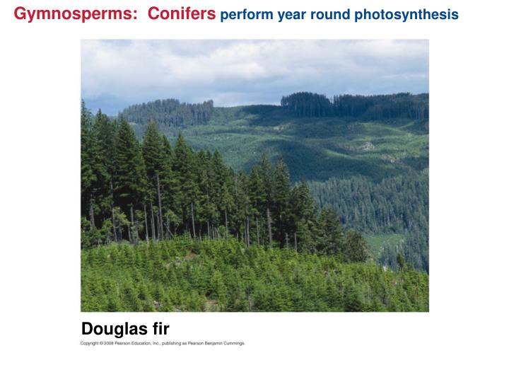 Gymnosperms:  Conifers