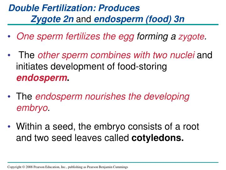 Double Fertilization: Produces