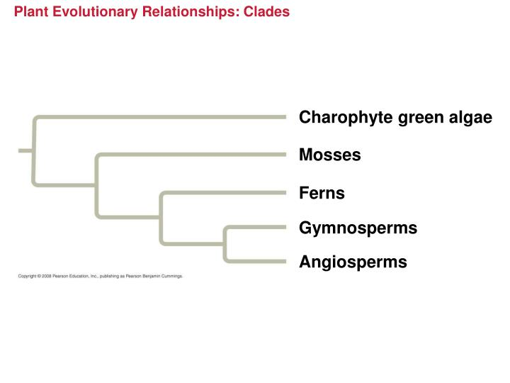 Plant Evolutionary Relationships: Clades