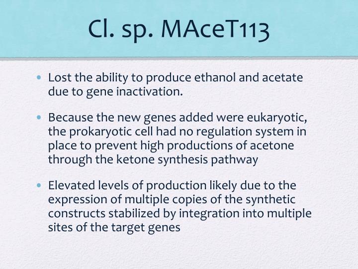 Cl. sp. MAceT113