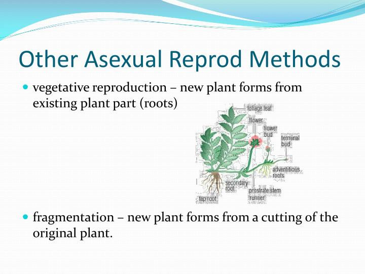 Other Asexual Reprod Methods