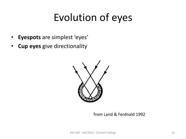 Evolution of eyes